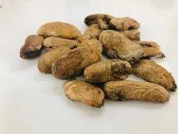 Mango Seeds - Aam Guthli - Mangifera Indica