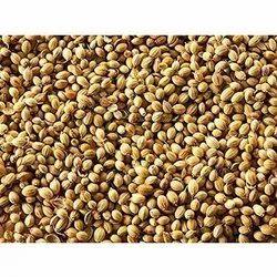 Yummy 12 Months Organic Coriander Seeds, Packet, PP Bag