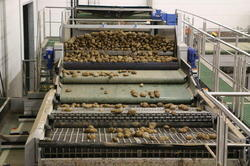 Potato Grading Machine