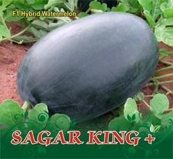 Sagar King Plus F-1 Hybrid Watermelon Seeds