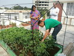 Rooftop Organic Vegetable