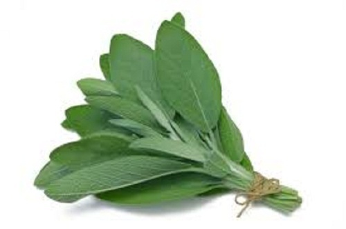 Nutraceuticals Raw Materials - Sage Leaf Extract