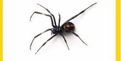 Spider Pest Control Service