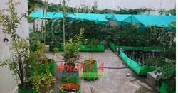 Terrace Gardening Rooftop Farming