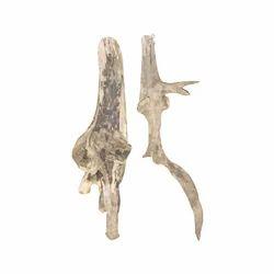 Pure Sandalwood Tree Roots