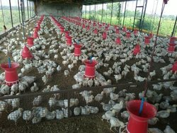 S Broiler Farm