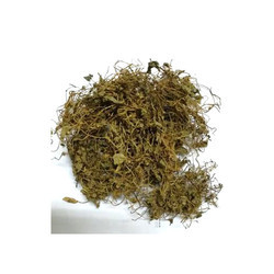 Herbal Brahmi