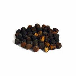 Bakayan - Melia Azedarach - Maha Neem - Chinaberry