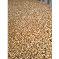 Raw Maize, High In Protein