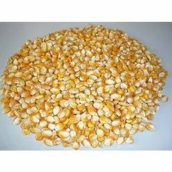 Yellow Maize Seed, Pack Size: 25 Kg