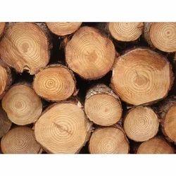 Canadian Pine Wood Log