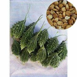 Hybrid Green Bitter Gourd Seeds