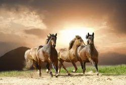 Multi Pvc 3d Horse Wallpaper Rs 95 Square Feet Wall Skin
