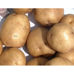 Brown 3797 Potato, Packaging Type: Gunny Bag, Packaging Size: 50 kg
