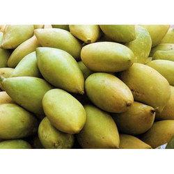 Totapuri Mango Plants