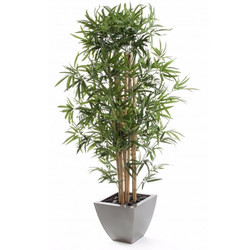Artificial Bamboo Tree - Indoor Plant - The Fancy Mart, Mohali | ID on artificial bamboo potted plant, artificial house plants & trees, artificial ficus trees for home decor, china doll plant, artificial bamboo vine,