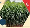 SSG-999 Hybrid Sorghum Sudan Grass Seeds