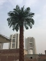 Date Palm Artificial Tree