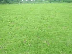 natural Garden grass