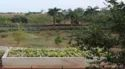 Vertical Wetland Based Wastewater Treatment System For 100 Pe