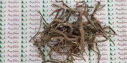 Punarnava Roots - Satodi - Boerhavia Diffusa