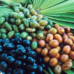 Saw Palmetto Oil (Extract)