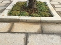 Tree Guard Paver
