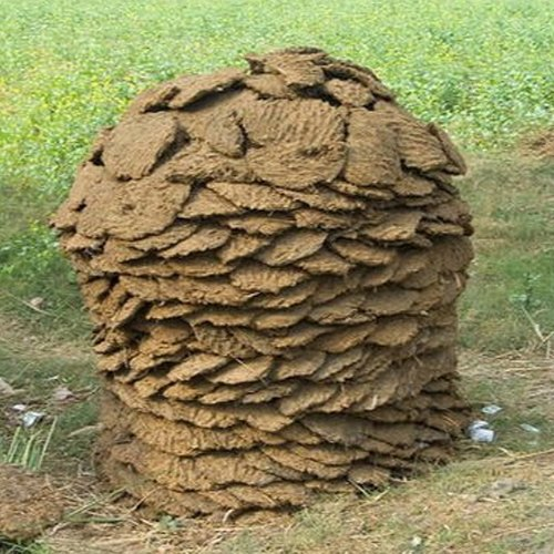 Round Dry Cow Dung