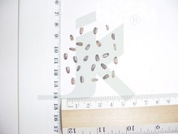 Organic SILYBUM MARIANUM 2, Packaging Type: Bag