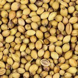 Coriander Seed Essential Oil