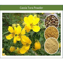 Natural, Fresh, Organic Cassia Gum Powder