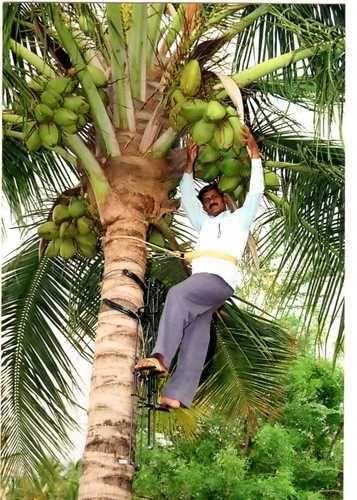 Manufacturer Of Climbing Device Amp Sugarcane Eye Cutting