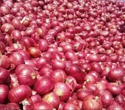 Onion in Tiruchirappalli - Latest Price & Mandi Rates from