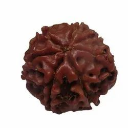 Seven Faced Rudraksha Beads