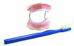 Tooth Hygiene Set Model / Dental Care Model With Brush