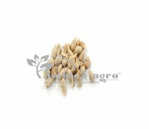 KAGDI LEMON SEEDS