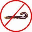 45 Days Millipede Pest Control Service