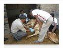 Cow Leg Treatment Services