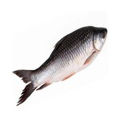 Rohu Fish, for Food purpose, Packaging Type: 1kg, Also Available In 550gm
