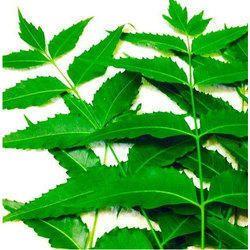 neem tree uses in tamil