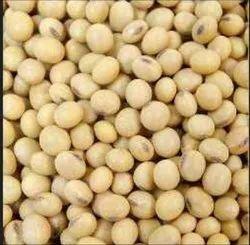 Organic Soyabin Seed