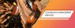 Cockroach Management Service In Kolkata