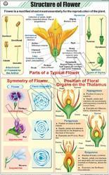 Structure Of Flower For Botany Chart