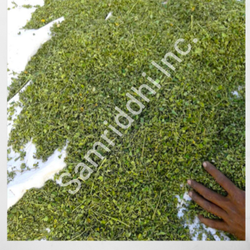 Natural Moringa Dry Leaves, Grade Standard: Medicine Grade, for Medicinal