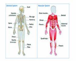 Musculo-skeletal Care Service