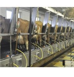 Milking Parlor Cubicles