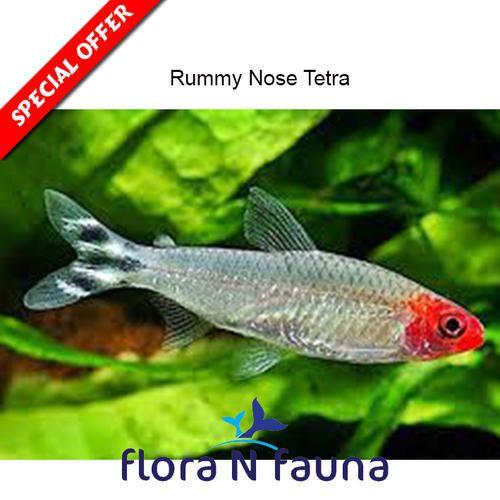 Tetra Fish Nano Planted