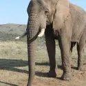 Elephant Feed