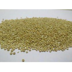 Quinoa Seeds - Chenopodium Quinoa