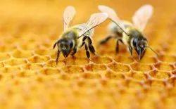 Honey bee Treatment